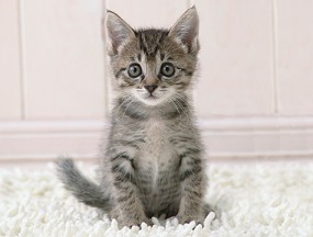 I said Khitain, not Kitten!